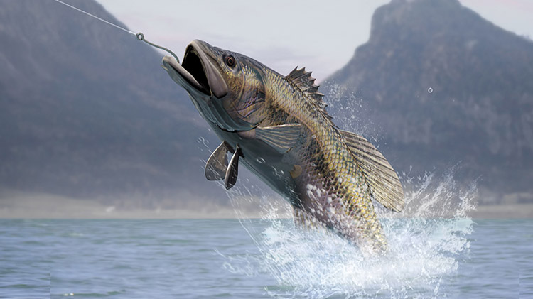 Big Bass Tournament
